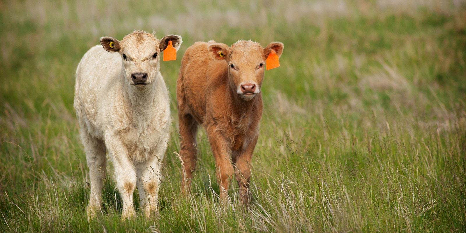 ranches and farm search corpus christi